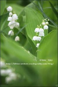 Suzuran_07
