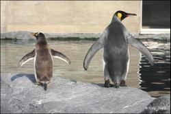 Penguin_01